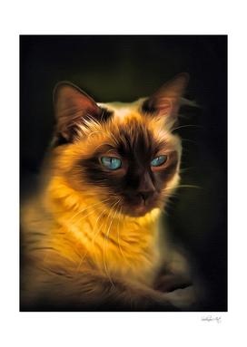 Balinese Cat Portrait