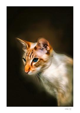 Colorpoint Shorthair Cat Portrait