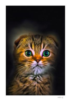 Scottish Straight Cat Portrait