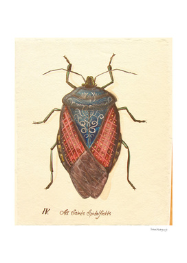 Bug #3