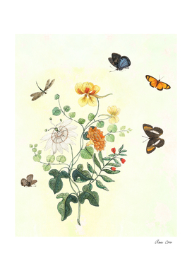The return of Spring - butterflies and flowers