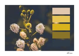 palette 6