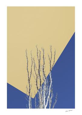 poplar branches