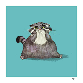 Manul Cat 1