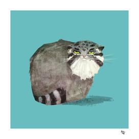 Manul Cat 2