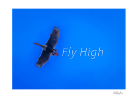 Fly High Concept Background Photography