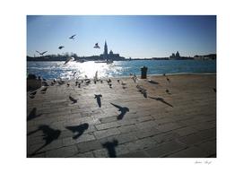 The Seaguls are ruling Venice