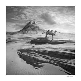Camel Hill
