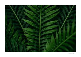 Background of the dark green leaf