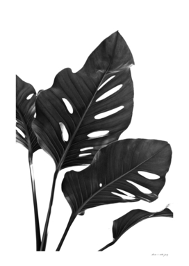 Monstera Black & White Vibes #1 #minimal #decor #art