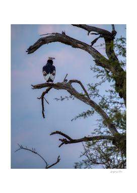 The Cultured Vulture
