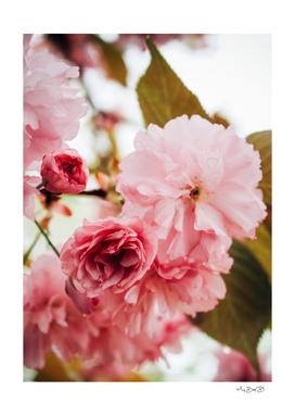 The Garden: Springtime