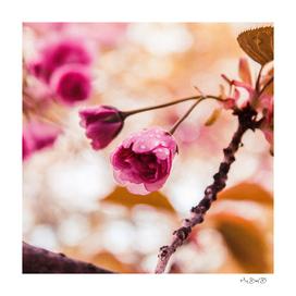 The Garden: Pre-Bloom