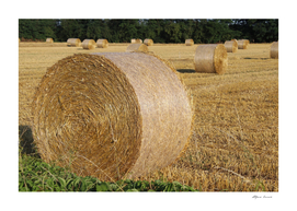 Hay bales in the countryside on a summers day