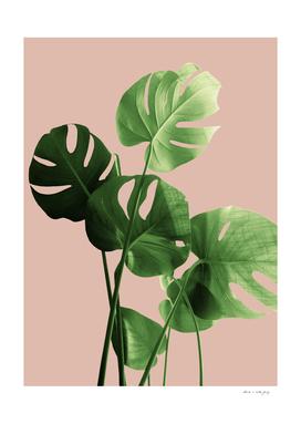 Monstera Leaves Pale Terracotta Vibes #1 #minimal #decor