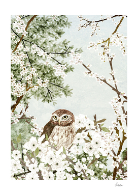 little owl cherry tree