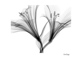 Black shadows of flower