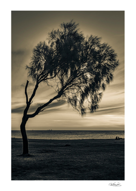 Coast Sunset Scene, Montevideo, Uruguay