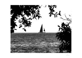 Sail in black and white