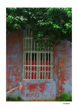 The Caribbean Windows