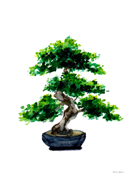 Japanese Watercolor Bonsai Tree