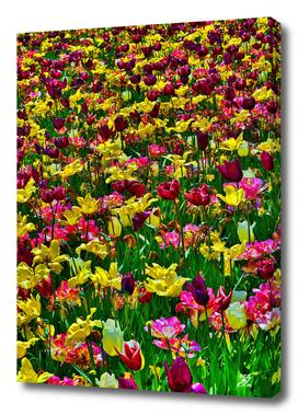 Flowers. Koblenz. Germany.