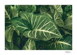 Dark Green Botanic Motif Photo