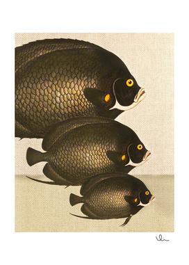 Fish Classic Designs 11