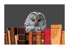 books_grey_owl