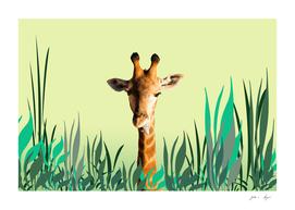 small_leaves_giraffe