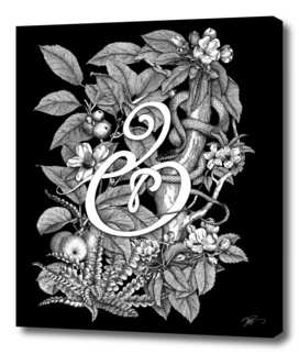 Ampersand – Adam & Eve BLACK