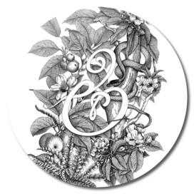 Ampersand – Adam & Eve, White