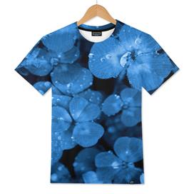 BLUE SERIES Natural textures clover grass close-up