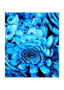BLUE SERIES Succulent, Blue wall-art, Nature, Photography