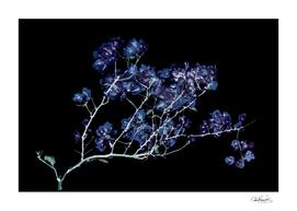 Photo Illustration Flower Over Black Background