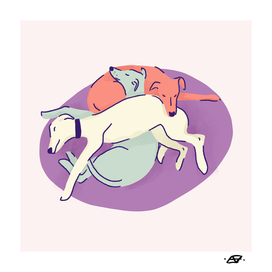 3 Whippets Resting on a Purple Pillow