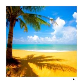 Beach Coconut plant