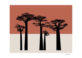 African baobab trees sunset terracotta