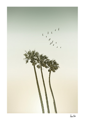 Vintage palm trees at sunset
