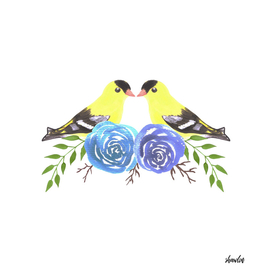 American goldfinch couples on rose twigs