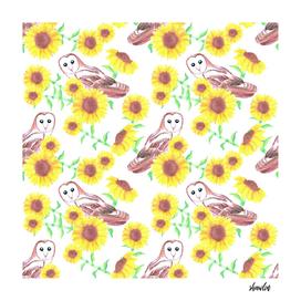 Barn owl or Tyto alba and sunflower