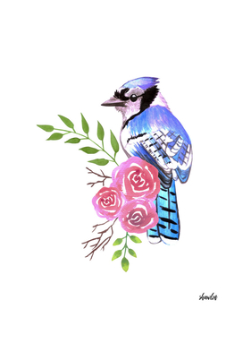 Blue Jay bird with red roses and twigs watercolor