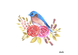 Eastern bluebird or Sialia sialis bird on red roses