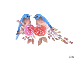 Eastern bluebird or Sialia sialis couple on red roses