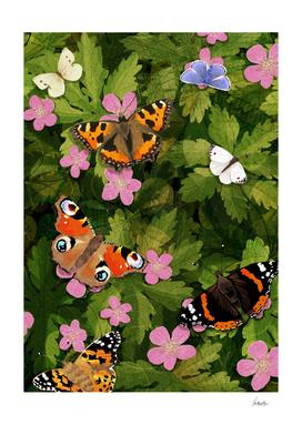 butterflies on geraniums