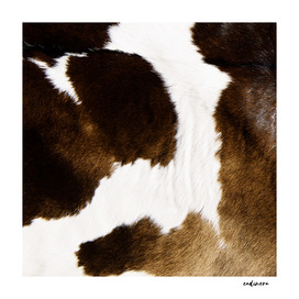 Beautiful Highland Cow Cowhide