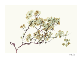Photo Illustration Flower Over White Background