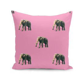 Many elephants