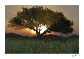 Sunset Tree 2020