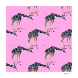 Many giraffes